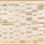 Hans D.J. Wallengren Coleoptera 20 thumbnail