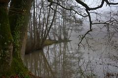 Ce soir, brouillard... (Bernard P.) Tags: eau brume brouillard fog arbres france yvelines étang reflet mist