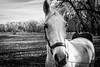 Horse (Phil Roeder) Tags: desmoines iowa waterworks horse blackandwhite monochrome leica leicax2