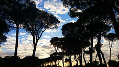 Villa Pamphili (Eternally Forgotten) Tags: lazio roma italy italia italien italian province region centro center nature park trees leaves clouds sky light walk relaxing pleasant soothing environment atmosphere journey travel tourism trip discovery voyage adventure hiking paths woods forest horizon staring silence colors bright brightness charming skies natural capital city eternal capitale