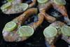 (Sherwyn Hatab) Tags: salmon fish