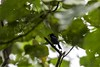 20171225-0I7A5067 (siddharthx) Tags: singapore sg redearedslider sungeibulohwetlandreserve canon7dmkii ef100400mmf4556lisiiusm nature wildlife migratorybirds whitebreastedwaterhen milkystork whimbrel commongreenshank commonredshank lessersandplover curlewsandpiper chineseegret greatercrestedtern orientalpiedhornbill collaredkingfisher orientaldollarbird greyheron vulnerable mangroves wetlands marsh nparksbuzz tree water mangrove bird landscape paintedstork purpleheron sky animal greategret snowyegret habitat nightheron forest wood monitor watermonitor lizard saltwatercrocodile grass malayanwatermonitor asianwatermonitor commonwatermonitor twobandedmonitor ricelizard ringlizard plainlizard nomarklizard periophthalmusargentilineatus rock river foliage gerridae waterstrider pondskaters waterskippers jesusbugs birdsinflight birdsinthewild wetland egret crab purplesunbird sunbird spiderhunters nectariniidae