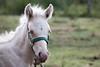 365-364 (Letua) Tags: 365project bragado amor animal caballo campo horse love naturaleza nature portrait potranca retrato tenderness ternura