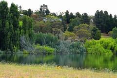 Reflection@Lake Jindabyne (Masoodz) Tags: lake jindabyne snowy mountains water reflections canon 650d 50mm niftyfifty dpp4 googlenik colorefexpro famalin nsw australia nature green