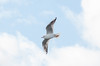 In-flight action (Hope Trains) Tags: suttonpark autumn 2017 inflightaction birds nature