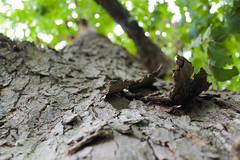 Tree bark texture (benjamin.t.kemp) Tags: