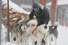 Attelage (francis.bordeleaumartin) Tags: sled dog traineau chien hiver equipe team winter snow neige frost