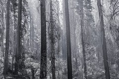 A Walk in the Woods (Starrgalla) Tags: clouds hillside hill mistymorning mist fog thewild wilderness sticks forest bark branches branch trees tree woods awalkinthewoods