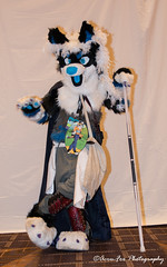 _DSC1319 (Acrufox) Tags: midwest furfest 2017 furry convention december hyatt regency ohare rosemont chicago illinois acrufox fursuit fursuiting mff2017 menagerie fursuitsaturday