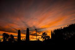 sunset silhouette (iatassi) Tags: sunset arizonasunset arizona artcityartists colors scottsdale southwest cactus iatassi iatassiphoto