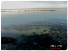 Fondali. (triziofrancesco) Tags: sea mare fondale water acqua costa shore riva lungomare scogli bari puglia italy