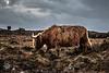 20180103-2018, Elgol, Isle of Skye, Schottland, Tag7-002.jpg (serpentes80) Tags: schottland isleofskye tag7 elgol 2018 scotland vereinigteskönigreich gb