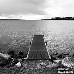 """Série 1# Photography Life Hope Final Project """"All Style"""" (lifehopefinalproject) Tags: suisse lac léman ponton arbre chemin rivière canard eau bw iphone 7 no retouche janvier 2018 rolle filtre de base"""