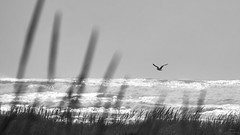 wAVES oF rEMINISCENCE 2 (wNG555) Tags: 2014 oregon seaside beach bw pacificcoast fav25 fav50