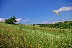 Fields in June (duran6687) Tags: june view landscape blue sky green pentax k10d türkiye manzara pasture amateurs doğa