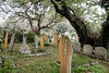 Hugh Town graves (Rich and Chris) Tags: scilly ophelia storm islandlife