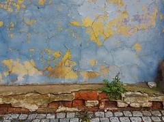 Picturesque (:Linda:) Tags: germany thuringia town eisfeld wall peelingpaint dandelion brick cobblestone cobbledstone