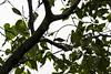 20171225-0I7A5058 (siddharthx) Tags: singapore sg redearedslider sungeibulohwetlandreserve canon7dmkii ef100400mmf4556lisiiusm nature wildlife migratorybirds whitebreastedwaterhen milkystork whimbrel commongreenshank commonredshank lessersandplover curlewsandpiper chineseegret greatercrestedtern orientalpiedhornbill collaredkingfisher orientaldollarbird greyheron vulnerable mangroves wetlands marsh nparksbuzz tree water mangrove bird landscape paintedstork purpleheron sky animal greategret snowyegret habitat nightheron forest wood monitor watermonitor lizard saltwatercrocodile grass malayanwatermonitor asianwatermonitor commonwatermonitor twobandedmonitor ricelizard ringlizard plainlizard nomarklizard periophthalmusargentilineatus rock river foliage gerridae waterstrider pondskaters waterskippers jesusbugs birdsinflight birdsinthewild wetland egret crab purplesunbird sunbird spiderhunters nectariniidae