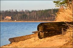 DSC_7042 (facebook.com/DorotaOstrowskaFoto) Tags: rejów skarżyskokamienna zalew zalewrejowski plaża drzewa woda świętokrzyskie poland spacer