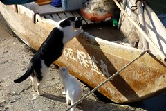 Wild Kittens at the Docks (Nagano, Japan) (Free For Commercial Use (FFC)) Tags: kittens cats cat kitten docks nagano japan boat animal freetravelimage world adventure escape travel freedownload freeforcommercialuse creativecommons creativecommonsattribution