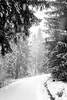 Frosty Path (frank_w_aus_l) Tags: natur harz germany x100t fuji fujifilm nature monochrome snow winter frost path light forest sw badgrundharz niedersachsen deutschland de bw blackandwhite noiretblanc white