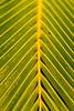 Plantas no Litoral Paranaense 1 (André Thiago Chaves Aguiar) Tags: plantas folhas flor chuva macro litoral nublado cor