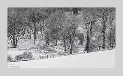 Spinney (Stuart Leche) Tags: fence frost gate hemplowhills northamptonshire scenic snow trees winter woodland farmland wood wwwstuartlechephotography