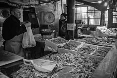 canocie (laura sinapi) Tags: chioggia squillamantis mercatodelpesce fishmarket pannocchie canocchie bw biancoenero blackwhite bn blackandwhite pesce fish