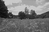 Kamptal_22 (rhomboederrippel) Tags: rhomboederrippel fujifilm xe1 august 2017 europe austria loweraustria kamptal kamp waldviertel plank clouds meadow tree flower blue bw monochrome astoundingimage