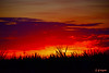 DSC_9510 ~ Sunset over Sugarcane in Clewiston (stephanie.ovdiyenko) Tags: sunset colors sky sun silouettes landscapes
