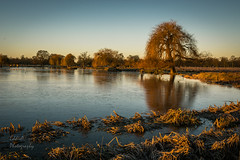 Bushy Park Colours (ed027) Tags: ifttt 500px autumn yellow trees sky sunrise lake reflections sunset winter water cold nature blue sunlight beautiful colour orange london calm peaceful pond landscapes peace dawn frost colours dusk beauty colourful natural light