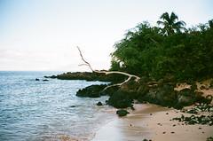 000253360005 (muffe3) Tags: contax t2 carl zeiss sonnar 38mm fuji superia 400 maui hawaii film analog