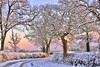Return of Winter, much more festive! (AM5555) Tags: trees christmas2017 bright 7dwf countryside outdoors outside natur nature naturephotography winter sunrise coth5 dof colour colourful festive nikon nikkor lens light white december rural frozen sunny paisaje colours frost