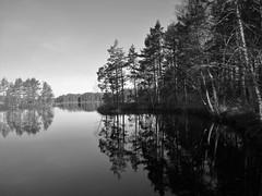 IMG_0007 (www.ilkkajukarainen.fi) Tags: happy life bkackandwhite mustavalkoinen museumstuff lake järvi tyyni aamu morning lanscape maisema nature luonto uusimaa
