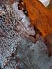 Web pearls (herman hengelo) Tags: mobile cobweb spinnenweb waterdruppels drops omgevinglonnekermeer deurningen twente thenetherlands
