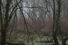 Oaks Bottom (Tony Pulokas) Tags: blur tree oaksbottom portland oregon oaksbottomwildlifepreserve tilt bokeh autumn fall ash oregonash fraxinus dogwood redosierdogwood cornus moss lichen
