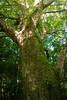 I'm looking down! (Will Vale) Tags: zealandia karorisanctuary p9 wellington leica huawei karori p9plus