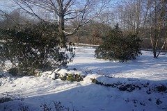 """DSC03442 Jan 1, 2018 Our front yard! Great start to 2018. .  Pelosi's """"Armageddon"""" doesn't look so bad from Grove City, Pa.. (David Diffenderfer, Grove City, Penn) Tags: economy newyear unitedstates future 2018 """"armageddon"""""""