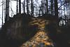 Fallen Tree (daniel.harry) Tags: tree woodland pine uk northumberland sony a6000 sigma 30mm dcdn