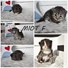 Wszystkie kociaki z miotu F mają nowe domki :) (bnatasza) Tags: fantazja ferrari fio fiodor fleur moit