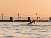 North Narrabeen-1070101 (mezuni) Tags: narrabeen sunrise northnarrabeen pool water ocean sun beach