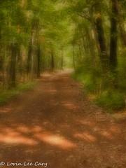 Wildwood Path (lorinleecary) Tags: landscapes ohio paths toledo trees wildwoodmetropark blur canvas textured