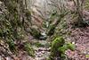 DSC_7364 (roibenedetti) Tags: polino terni umbria montagna d500 nikon 18140 inverno gole roccie muschio licheni felci