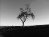 little tree in black and white (tobsest) Tags: bq aquaris u plus