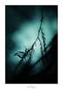 Une nouvelle Ainée (Naska Photographie) Tags: naska photographie photo photographe paysage proxy proxyphoto macro macrophotographie macrophoto minimaliste minimalisme monochrome bleu bleue blue nature extérieur silhouette ombre chinoise chinoiserie contre jour color couleur bokeh flare flou art artistique artist poésie poète poétique composition mante religieuse mantidae mantis arthropodes graphique graphisme ailes ailées ailée antenne antennes