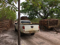 "GWD forestry timber harvest Brazil <a style=""margin-left:10px; font-size:0.8em;"" href=""http://www.flickr.com/photos/47172958@N02/38726093484/"" target=""_blank"">@flickr</a>"