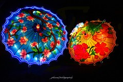 China Light ZOO Antwerp 2017-2018 (3rd series) (jackfre 2) Tags: belgium antwerp zoo chinalight show lightshow chinalightshow20172018 animal flowers colours artistry night