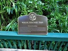 Wailua River State Park - Fern Grotto (15) (pensivelaw1) Tags: hawaii kauai wailuariverstatepark ferngrotto