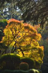 Tokyo (alias_alice) Tags: tokyo japan 東京 日本 travelphotography november autumn shinjukugyoen garden tree koyo