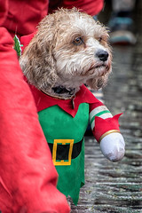 """2 legs good, 4 legs bad"" (Andy J Newman) Tags: charity santarun colorfex funrun dog run bristol docks bristoldocks fur hospice nikon santa d500 england unitedkingdom gb"